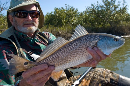 laredfish-fish-6